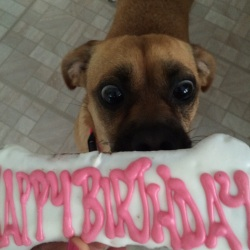 Moz turns 2!
